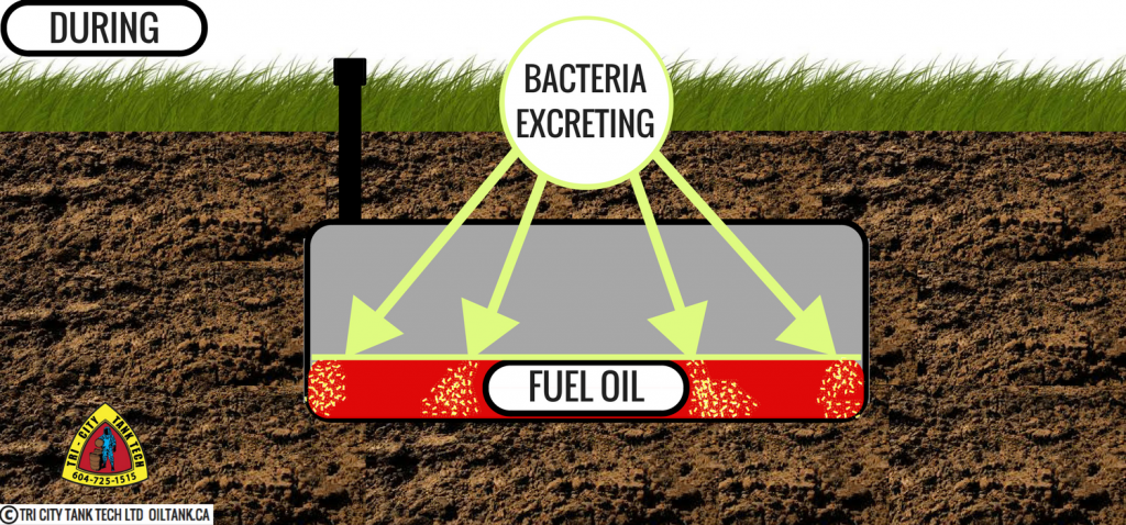 oil-tank-removal-leaking-bacteria-image